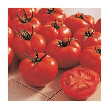 Tomate Ferline F1