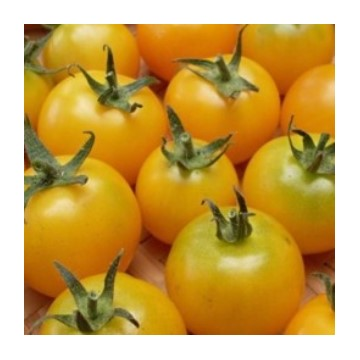 Tomates jaunes gold nugget type cerise jaune