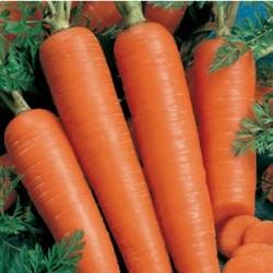 Carottes de colmar graines schletzer - Arbre a carotte ...