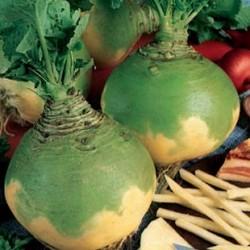 Choux Navet Rutabaga collet vert (gamme maraicher)