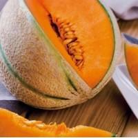 Melon type Charentais (gamme maraicher)