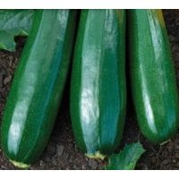 Courgette verte maraichère (gamme maraicher)