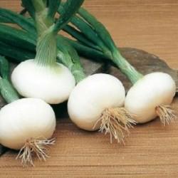 Oignons blancs Barletta