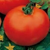 Tomate Montfavet 63/5 F1