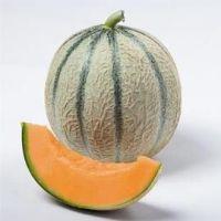 Melon Candilo BIO F1
