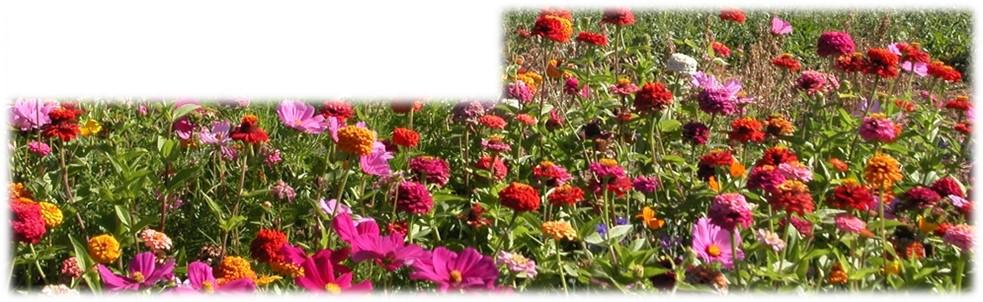 Des jachères Fleuries